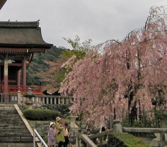 Ihre Reise nach Japan